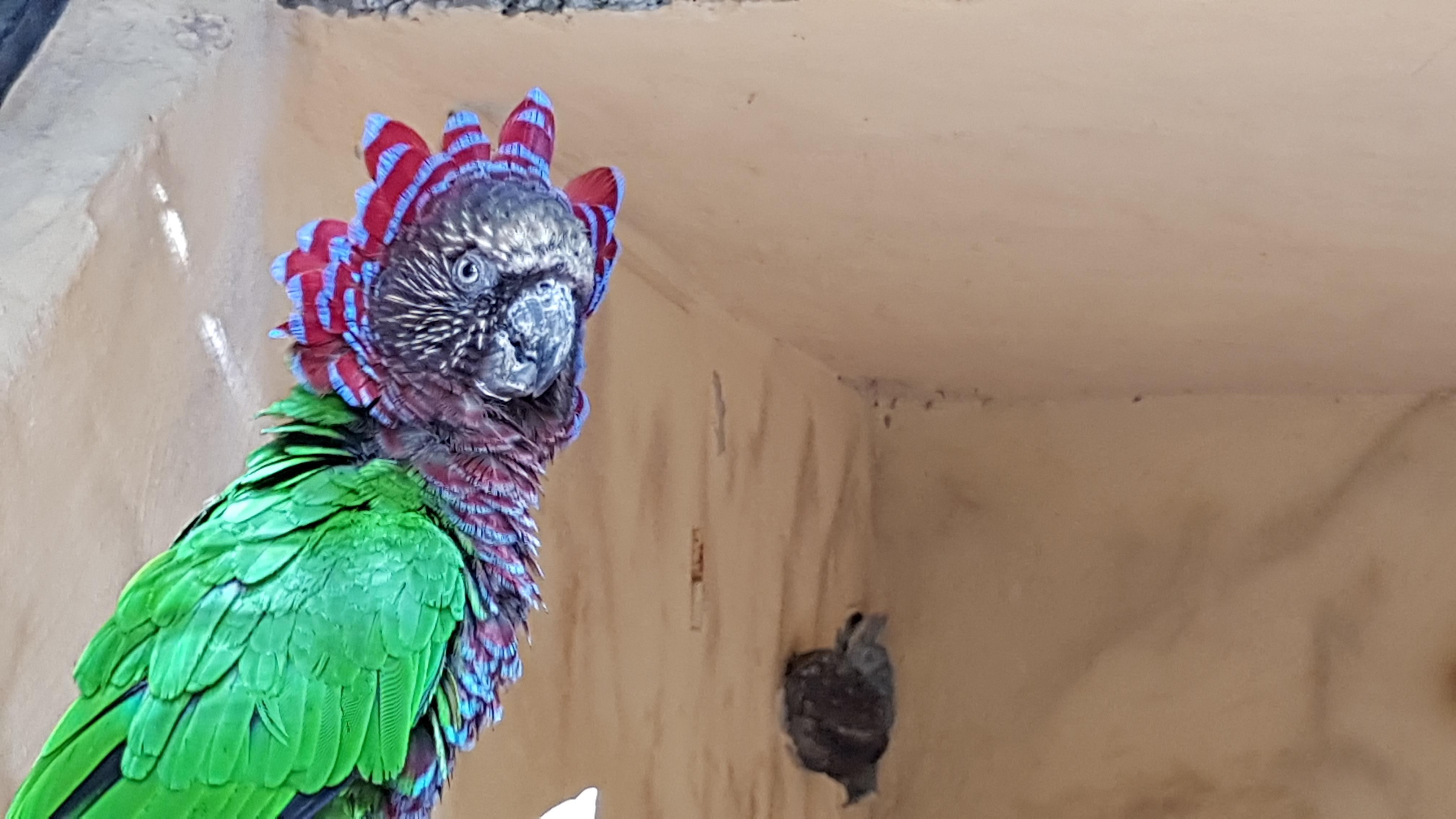 Palmitos Park Papagei 1