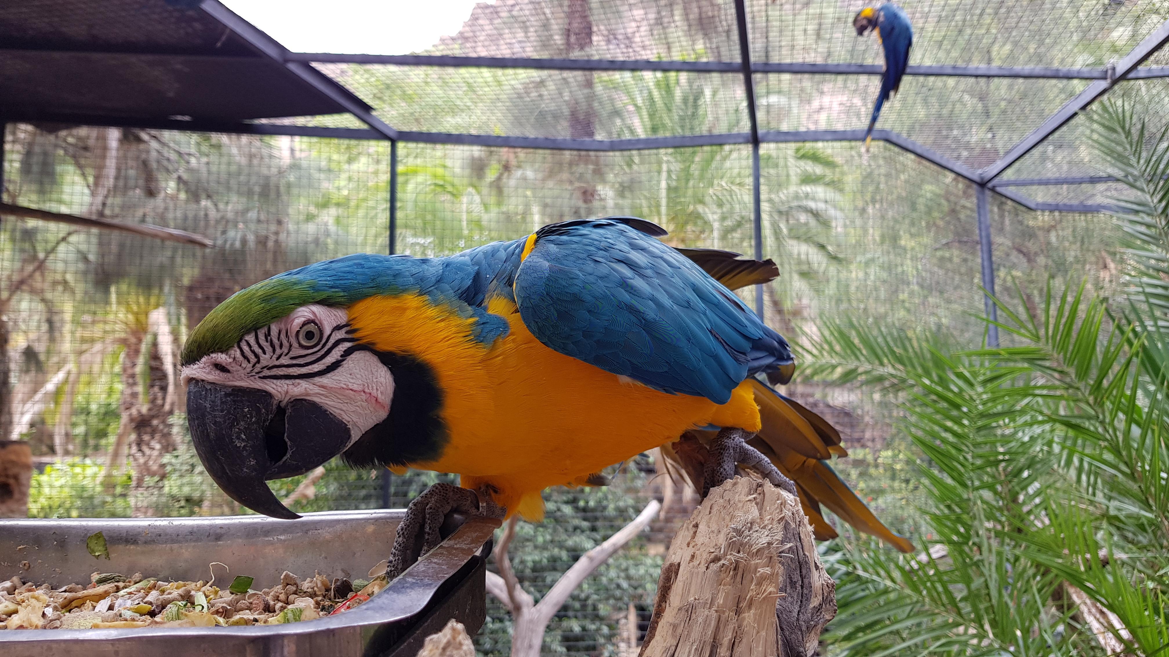 Palmitos Park Papagei 2