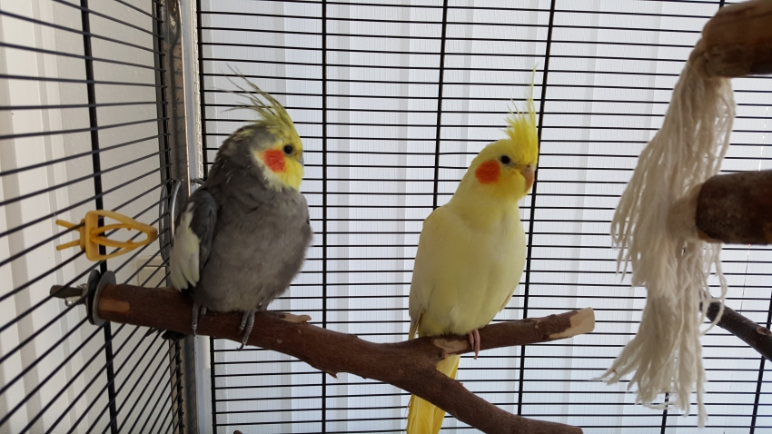 my-animals.de - Chico und Lucy